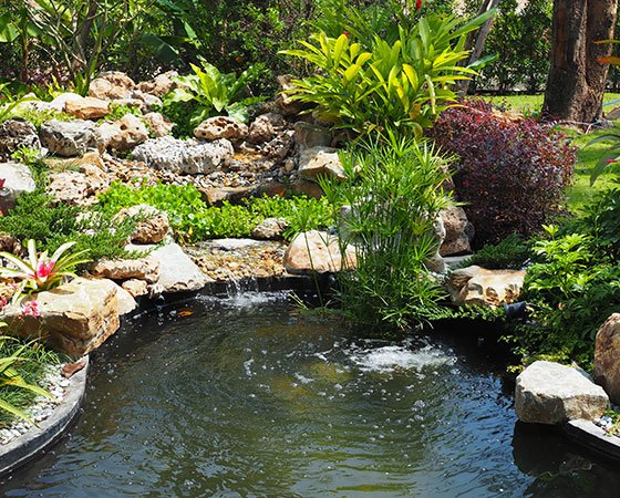Large pond in backyard with plants and koi fish