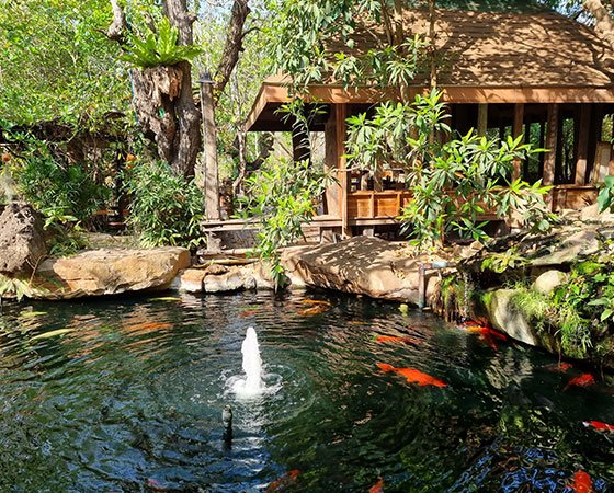 Large pond with outdoor patio, stone walls, green treese, and big koi fish
