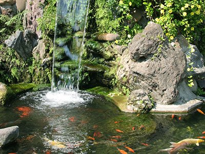 Large water pond, with huge stone rock, stone walls, high waterfall, and koi fish.