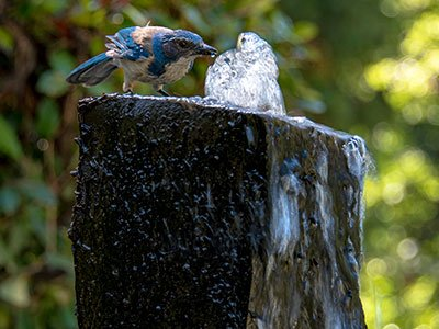 Small basalt column fountain, with a small bird drinking water above it.