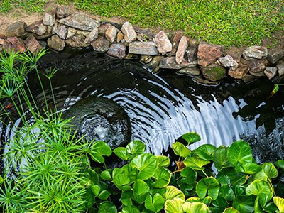 Small water pond, with clean water, stone rocks, and lush greenery all over it.