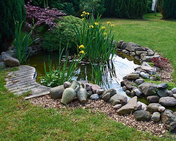 Alt text: Small water pond with big stone rocks, green plants, and yellow flowers.